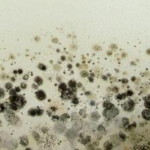 black-mold-removal-san-francisco
