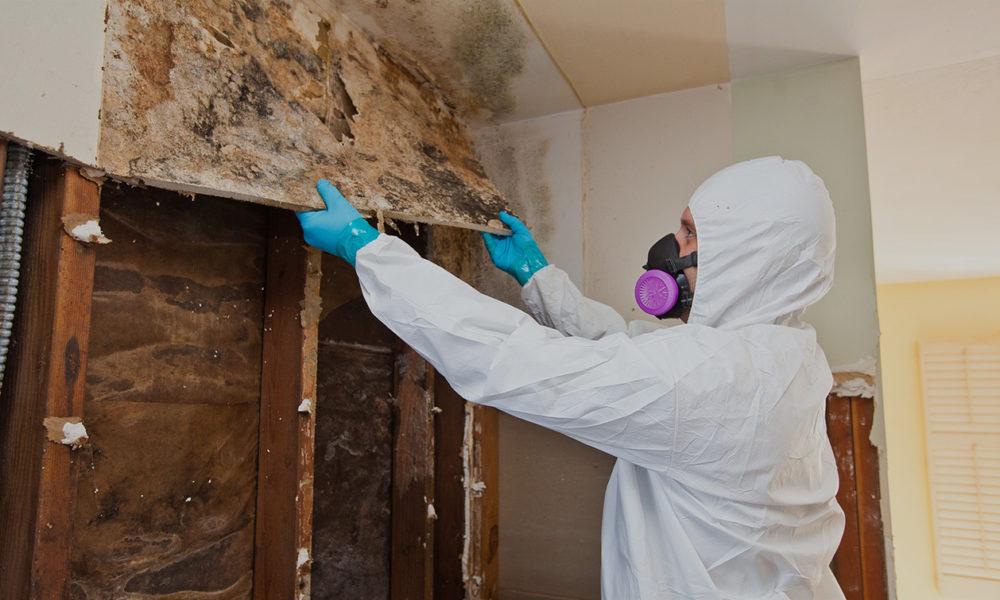 Mold Remediation Swift Restoration